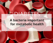 Modulation of the intestinal microbiota to improve diabetic patients' health