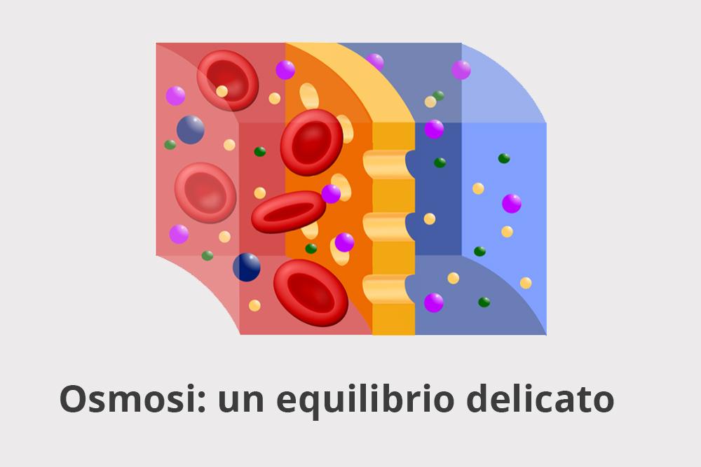 La perturbazione osmotica transitoria provoca alterazioni a lungo termine del microbiota intestinale1